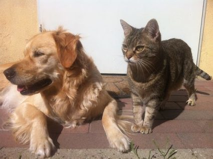 How To Protect Your Pet from Pest Control Dangers | Animal Bliss | Animal Welfare | Scoop.it