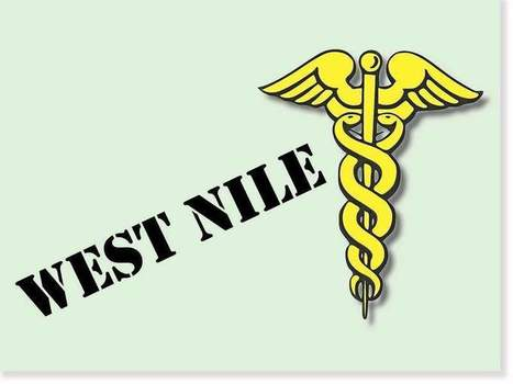 Turkey with West Nile was 'acting drunk' - The Morning Sun | West Nile Virus | Scoop.it