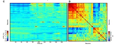 First Movie Of An Entire Brain's Neuronal Activity — The Physics arXiv Blog | Biobit: Computational Neuroscience & Biocomputation | Scoop.it