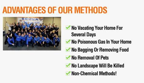 Orange County Pest Control | Cyber Guard | Scoop.it