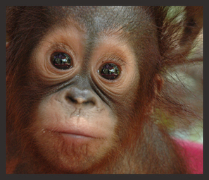 Palm Oil Action :: Environmental Impacts Of Deforestation | Say No To Palm Oil | Scoop.it