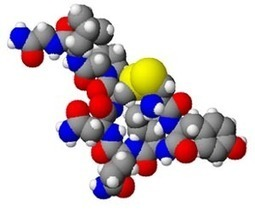 Oxytocin produces more engaged fathers and more responsive infants | The Human Condition According to Me | Scoop.it
