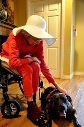 Everyone Loves Lucy - Therapy Dog   Houston Assisted living www.autumngrove.com   Scoop.it