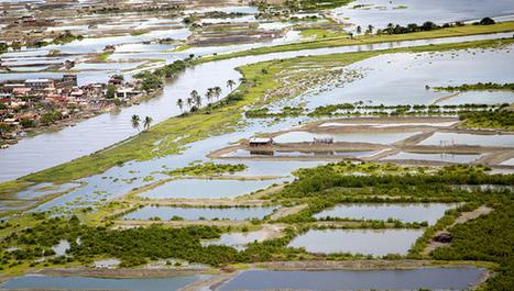 Cambio climático: a más vulnerabilidad menos publicaciones | Educacion, ecologia y TIC | Scoop.it