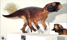 Scientists reveal most accurate depiction of a dinosaur ever created   Elsa Panciroli   Kool Look   Scoop.it