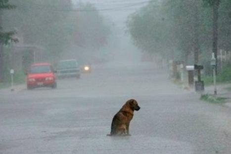 Ocho cosas que puedes hacer por los perros callejeros durante el temporal | Animales | Scoop.it