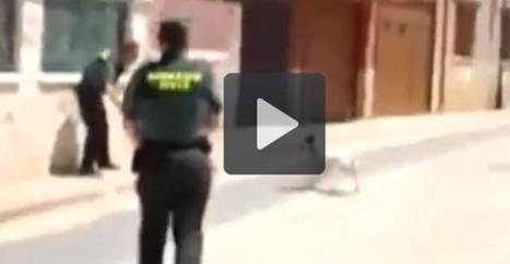 Nació Digital: Un guàrdia civil dispara contra un gos només perquè li bordava | Apunts de Salvador Guinart | Scoop.it