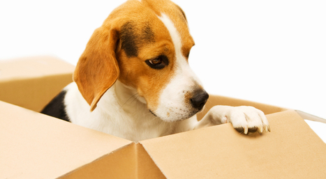 Tips for Moving with Pets | Christos & Christos Moving | Scoop.it