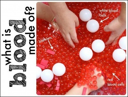 Hands-on Science: What is blood made of? - I Can Teach My Child! | Learn through Play - pre-K | Scoop.it