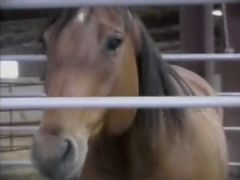 Part 1: The Pros and Cons of Horse Slaughter | Animal cruelty | Scoop.it