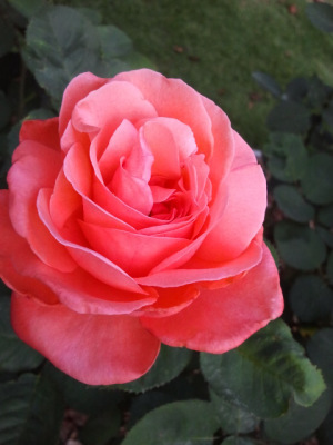 Remembering My Garden on WordlessWednesday   Annie Haven   Haven Brand   Scoop.it