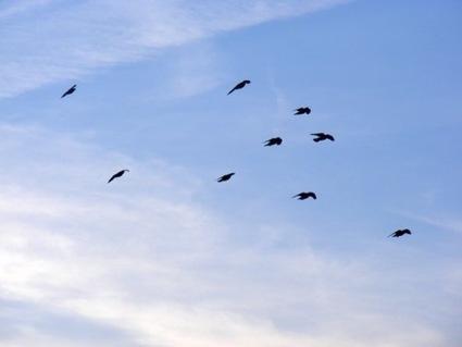 Database upstart NuoDB 'Blackbirds' spread wings, fly into version 2 - Register | Sales Leads | Scoop.it