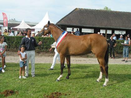 Championnat de France des Pouliches: La  génétique prise en compte / Elevage et étalons / élevage / Accueil - Cavadeos | Cheval et sport | Scoop.it