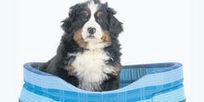 Mascotas que duermen en la cama del dueño | Animales | Scoop.it