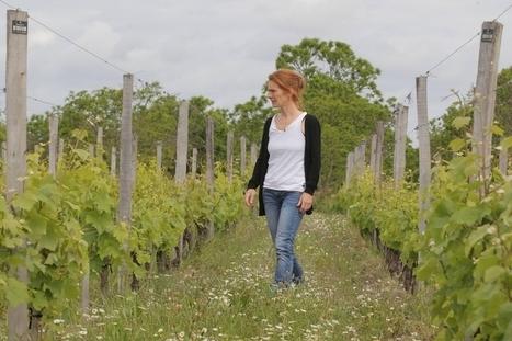 COP21 : quel vin boirons-nous en 2050 ? | Oenologie - Vins - Bières | Scoop.it