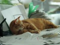 """Catvertising"" Swipes at the Internet | culture | Torontoist | Psychology of Consumer Behaviour | Scoop.it"