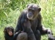 PHOTOS: Orphaned Chimp Finds New Family | Sending My Love | Scoop.it