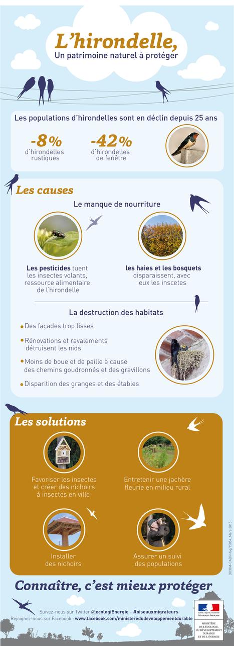 Les 9 et 10 mai : journées mondiales des oiseaux migrateurs | Biodiversité & Relations Homme - Nature - Environnement : Un Scoop.it du Muséum de Toulouse | Scoop.it