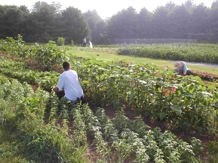 How Rural Can Reclaim Sustainable Ag   Daily Yonder   Keep It Rural   Food issues   Scoop.it