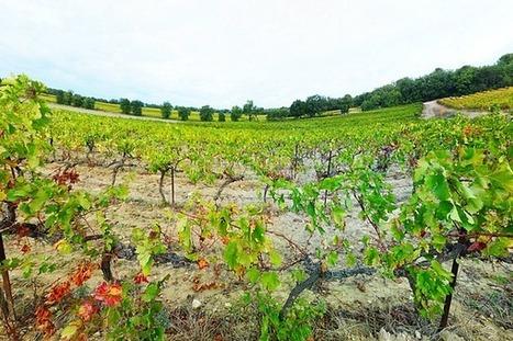 Les beaux paysages du vignoble français - | Le Vin et + encore | Scoop.it