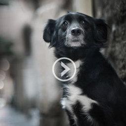 A quoi pense un animal abandonné ? - Fondation 30 Millions d'Amis | Associations, bénévolat, solidarité et philanthropie | Scoop.it
