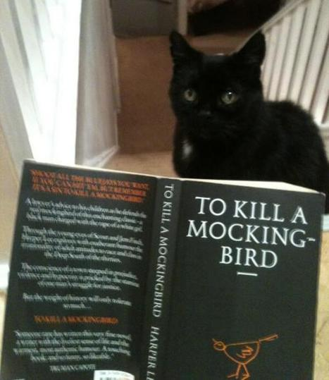 Twitter / MYSADCAT: My cat is sad because he dislikes ... | Social Promotion | Scoop.it