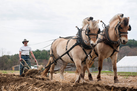 Horses as Farm Equipment | Sustain Our Earth | Scoop.it