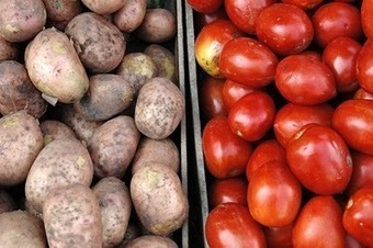 Genetic difference between tomato and potato only 8% | Plant Genomics | Scoop.it