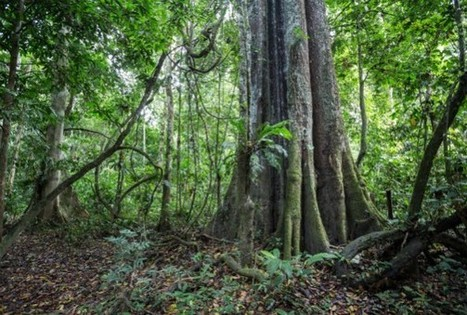 Bad News: Only Two Intact Forests Left On Earth | GarryRogers NatCon News | Scoop.it