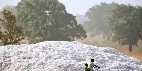 Au Burkina, les producteurs de coton veulent discuter d'égal à égal avec les industriels | Questions de développement ... | Scoop.it