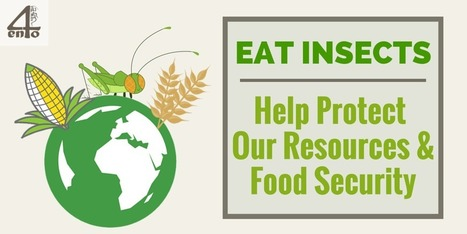 How Insects Can Help Preserve Our Resources & Increase Global Food Security - 4ento | Entomophagy: Edible Insects and the Future of Food | Scoop.it