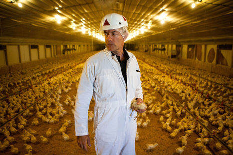 FACTORY FARMING: Farmaceuticals: the drugs fed to farm animals | > Animal Welfare | Scoop.it