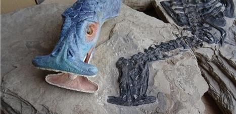 Cet animal à tête de marteau est le premier reptitle marin herbivore | Aux origines | Scoop.it