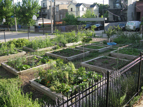 City of Chicago's Large Lot Program | Community Gardening Resources | Scoop.it