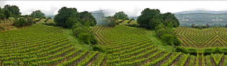 Paris is a popular gateway into wine tours in France | World Travel | Scoop.it