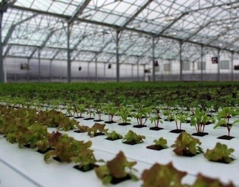 BrightFarms Raises $4.9M To Build Greenhouses On Urban Supermarkets   Information Technologies for Agriculture   Scoop.it