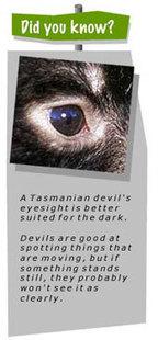 DPIPWE - Tasmanian Devil Facts for Kids   Devil Facial Tumour Disease   Scoop.it