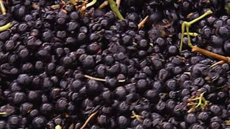 Getting the wine industry out of the red | World Wine Stories | Scoop.it