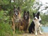 L'Etoile des Bergers - Education canine en Alsace  Alimentation animale - facebook | Educateur canin en Alsace - Etoile des bergers | Scoop.it