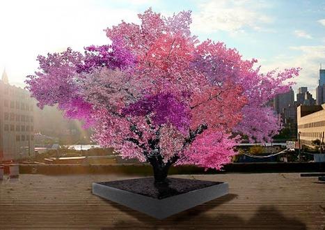 L'albero che produce 40 tipi di frutta - PianetaTech | Coltivare l'orto | Scoop.it