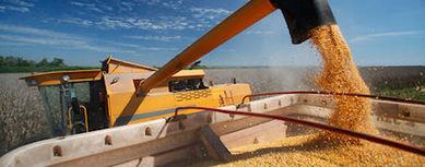 US: NCGA Announces 2014 Corn Yield Contest Winners   MAIZE   Scoop.it