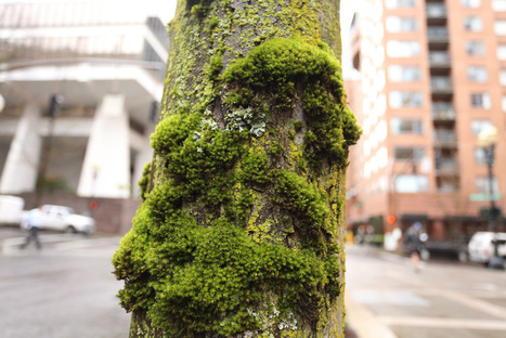 How moss helped reveal Portland's pollution | Sustain Our Earth | Scoop.it