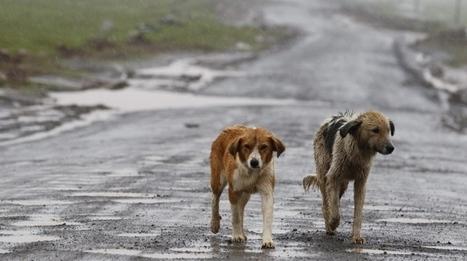 Emergenza freddo per un milione di cani e gatti senza casa - QuotidianoNet | Dog Style | Scoop.it