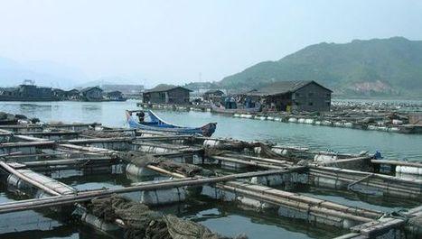Disease threatens aquaculture in developing world - SciDev.Net | Aquaculture (Global Aqua Link) | Scoop.it