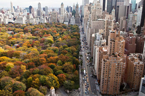 How Trees Save at Least One Life Each Year in Major Cities | Environment | Scoop.it
