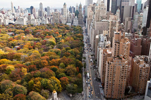 How Trees Save at Least One Life Each Year in Major Cities