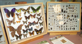 Entomologists Support Specimen Collections as Vital Component of ... | Test | Scoop.it