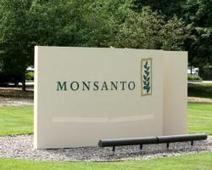 Monsanto's Plan Puts Focus On Data | Grain du Coteau : News ( corn maize ethanol DDG soybean soymeal wheat livestock beef pigs canadian dollar) | Scoop.it