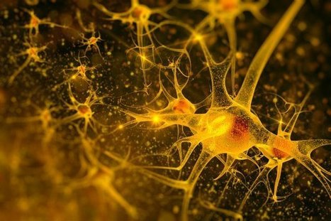 Scientists have converted human skin cells into brain cells | Biotech and Beyond | Scoop.it