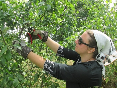 Summer Orchard Pruning | Transition and Permaculture | Scoop.it